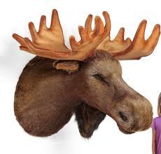 fabulous wall decoration design using wall mounted moose head inspiring dark brown furry wall mounted