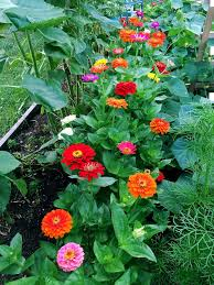 i also love that zinnias make an instant fl bouquet and that they are easy to arrange