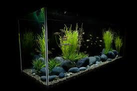 fish tank lighting ideas. Fish Tank Styles Freshwater Aquarium In A Modern Interior Detail Moonstones Fishtank Design Lighting Ideas I
