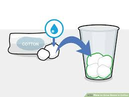 How To Grow Beans In Cotton 14 Steps Wikihow