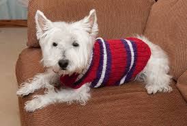 Free Knitted Dog Sweater Patterns Classy Knitted Dog Sweaters To Keep Your Pooch Warm