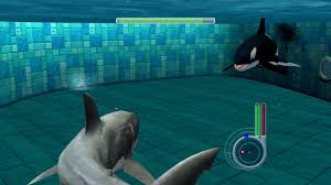 megalodon shark compared to killer whale. Contemporary Whale YouTube Premium To Megalodon Shark Compared Killer Whale S
