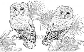 Owl Coloring Pages Bestofcoloringcom