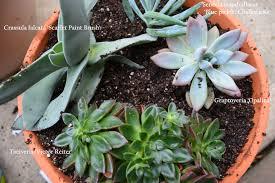Best 25 Succulent Pots Ideas On Pinterest  Indoor Succulents Succulent Container Garden Plans