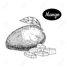 Fresh Mango Hand Drawn Sketch Style Tropical Summer Fruit Vector