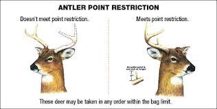 Whitetail Deer Size Chart Deer Seasons Bag Limits Maryland Hunting Seasons