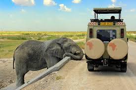 elephant car insurance number elegant elephant car insurance number lovely elephant car insurance phone