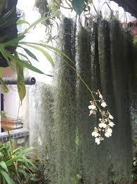 Garden Chronicles: Tips to Grow Spanish Moss