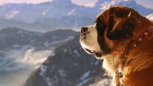 Saint Bernard Height Chart 10 Big Facts About Saint Bernards Mental Floss