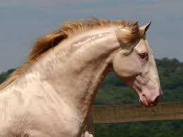 draft horse head profile. Contemporary Draft And Draft Horse Head Profile N