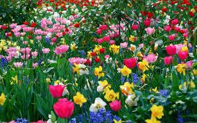 flowers garden. Beautiful Flower Garden Wallpaper Flowers 0