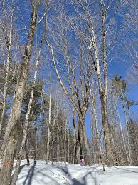 This Month On The Homestead Maple Trees Maple Sap Maple