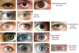 Iris Color Chart The Eye Color Chart Hubpages