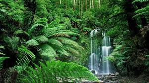 hd wallpapers nature forest. Exellent Nature Waterfall Forest Nature Hd Wallpaper  Free HD Wallpapers And  For Nature A