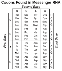 Dna Sequence Chart Codon Charts Molecular Genetics