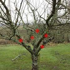 Canopy Management Of High Density Subtropical Fruit Trees Avocado Fruit Tree Shapes