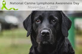 Canine Lymphoma Symptoms Caninelymphomaawarenessday Hashtag On Twitter