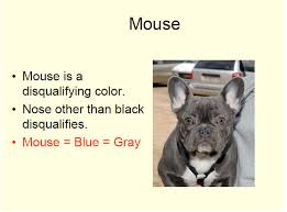 French Bulldog Color Chart Blue Fbs