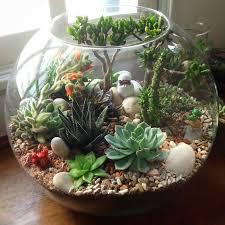 Small Picture Best 25 Cactus terrarium ideas only on Pinterest Terrarium diy