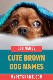 Brown dog has excellent breakfast burritos and a delightful cup of coffee! Cute Dog Names For Brown Girl Dogs Page 1 Line 17qq Com