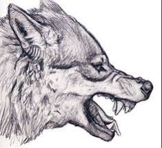 white wolf growling drawing. Drawing In Graphite Of Wolf Snarling Used This Reference Link Snarl White Growling