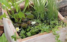 gardening how to build a mini pond and