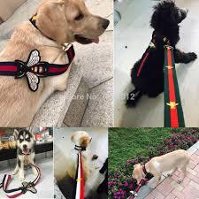 Designer Dog Clothes And Accessories Luxury Bee Designer Dog Collar