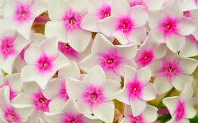 flower wall paper download flower wallpaper 49 images on genchi info