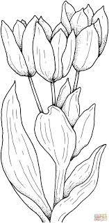 Tulips Flower Coloring Page From Tulip