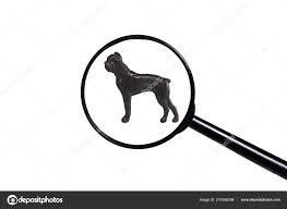 ᐈ Boxer dog outline stock photos ...