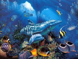 изумительный подводный мир фотографии морских обитателей дельфины