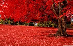 Red Autumn Wallpapers - Top Free Red ...