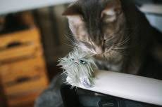 Image result for rosewood GRUMPY CAT HAIR BALL