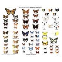 Moth Identification Chart Charts