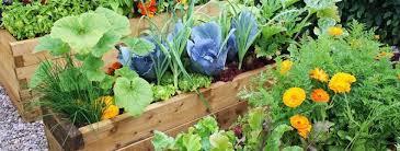 Kale Companion Planting Chart Companion Planting Palmers Garden Centre