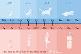 Cat Years Chart Calculator How Do You Calculate Cat Years To Human Years
