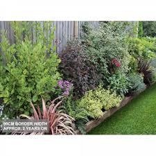 evergreen easy care shady border