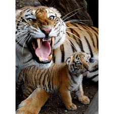 Image result for mother protecting her young