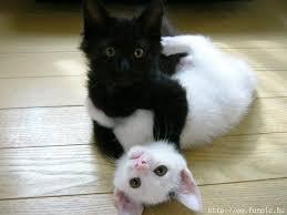 kitten corrigeren