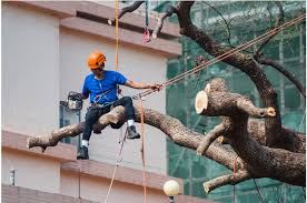 Benefits of Hiring a Tree Removal Company - Inside Home Recording