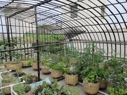 trendy design terrace vegetable garden innovative ideas veggies