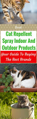 cat repellent for garden. Full Size Of Backyard:cat Repeller Beautiful How To Keep Cats Out Your Backyard Cat Repellent For Garden