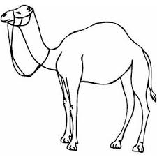 Small Picture Standing Camel Coloring Page
