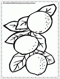 Small Picture Orange Fruit Printable Coloring Pages Free Printable Kids