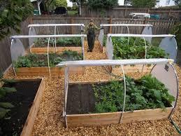 Home Vegetable Garden Design Delectable Ideas Backyard Vegetable ...