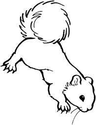 Realistic Squirrel Coloring Pages Coloring Pages