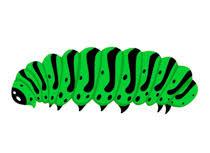 caterpillar clipart. Delighful Clipart Caterpillar Insect Clipart Size 79 Kb From Insect Clipart Throughout