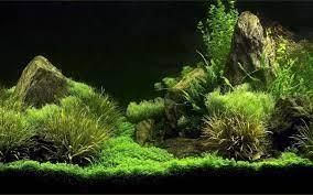Aquarium Wallpapers Free Download ...