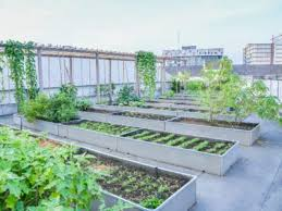 how to build a rooftop garden