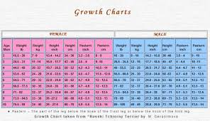 Brt Puppy Growth Chart Puppy Growth Chart Black Russian
